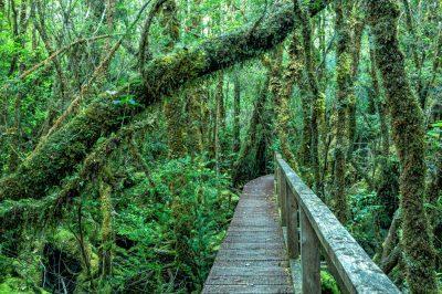 Bosque hundido